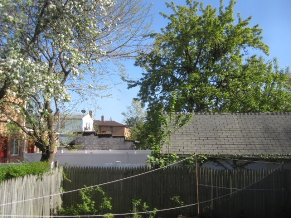 A view of the backyard along with the trees and sky